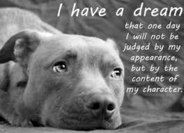 Pitbull Quotes 87 Awesome Pitbull Dog Quotes Beauteous Best 24 Pit Bull Quotes Ideas On