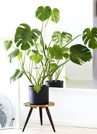 large house plants ingenious best p l a n t s images on easy care shining indoor