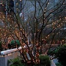 lighting outdoor trees. White Lights On Trees Along Edge Of Yard. Lighting Outdoor T