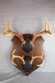 deer antler mounting kit mount by on