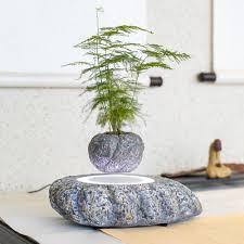 bonsai tree for office. Levitating Bonsai Tree For Office S