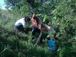 Кафедра фармакогнозии и ботаники Волгоградский государственный  Ботаники на привале Заготавливаем сырье хвоща полевого