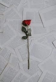 Single Rose Wallpapers - Top Free ...