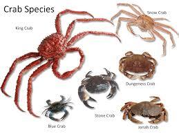 Crab Species Chart Fish Shellfish Identification The Culinary Pro