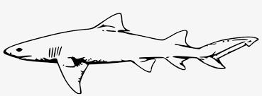 Great White Shark Clipart Shark Outline Shark Black And