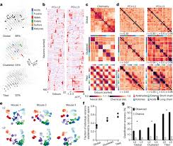 cortical representations of odour e