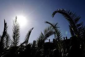 Risultati immagini per rami d'ulivo, di palme immagini