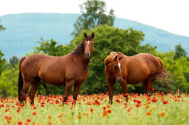 Image result for What You Need To Know About Garlic Supplement For Horses?