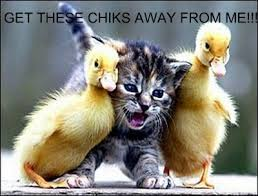 invader jess and her friends images funny cat pic wallpaper and background photos