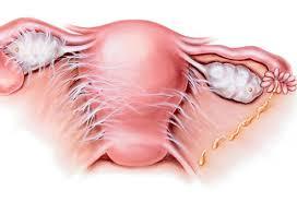 Symptoms of Herpes in Woman   Vaginal Herpes