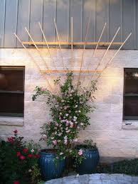 fan trellis. i\u0027ve had a hard time finding decent fan trellis for climbing roses and vines, so i decided to make one myself. we planted this \