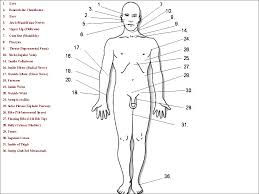 Pressure Points Of The Body For Fighting 98825 Newsmov