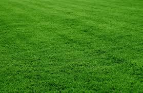 grass. Wonderful Grass Park Grass Throughout