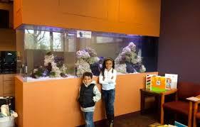 custom see through saltwater reef aquarium in office aquarium office