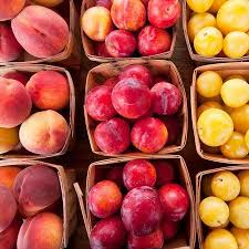 Plum Trees Quality Fruit Plum Trees  Allotment ShopPlum Fruit Tree Varieties