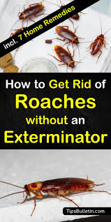 try these 8 home remes for how to get rid of roaches without an exterminator