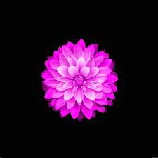 iPhone Lotus Wallpapers - Top Free ...