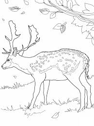 Deer Coloring Pages Free Printable Deer