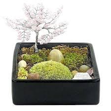 moss terrarium ideas zen tree garden zen garden air plant terrarium terrarium terrarium moss terrariums gifts