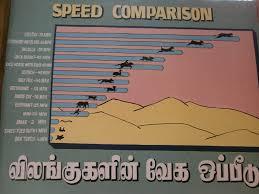 Animal Speed Comparison Chart Speed Comparison Of The Animals Ramyarajesh