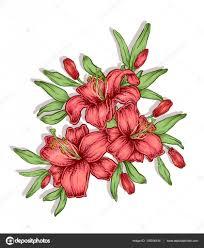 Ručně Kreslené Květiny Lilie Ozdobné Královské Lilie Složení Návrh