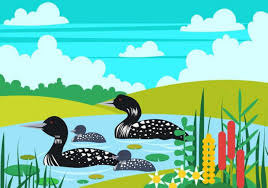 loon bird family in the lake nohat