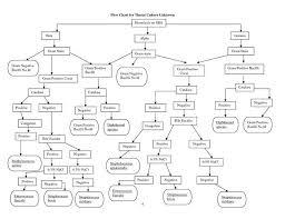 Gram Positive Cocci Flow Chart Identification