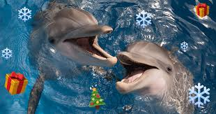 dolphins with holiday emojis