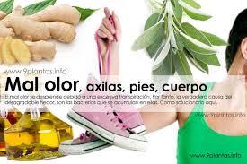 Resultado de imagen para Remedios naturales  para la transpiración y mal olor corporal
