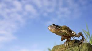 Image result for picture of a frog leaping in air