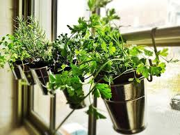 12 kitchens with small herb gardens