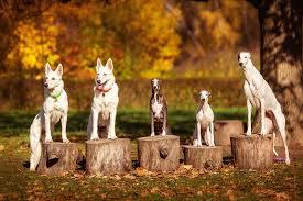 Dog Park Vending Machines Impressive 48 Dog Parks In Northwest Arkansas REMAX Real Estate Results