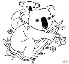selected koala coloring page koalas pages