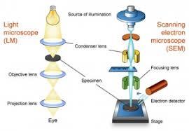 Scanning Electron Microscopy Embryology