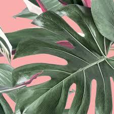 Behang Botanical Leaves Roze Vliesbehang 974x280cm 2 Sheets