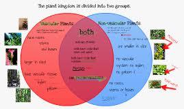 Venn Diagram Of Vascular And Nonvascular Plants Copy Of Copy Of Copy Of Vascular And Non Vascular Plants