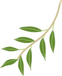 「オリーブ無料イラスト」の画像検索結果