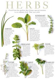 Herb Plant Identification Chart 16 Rational Culinary Herb Chart