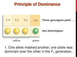 principle of dominance principle of dominance major magdalene project org