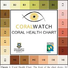 Coral Classification Chart Figure 1 From Coral Health Monitoring Linking Coral Colour