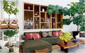 Indoor Plants Living Room Cute Plants For The Living Room Fresh Living Room Decorating Ideas