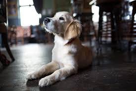 Image result for dog in paris restaurant