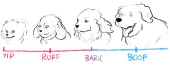 Dog Chart Dogs Know Your Meme