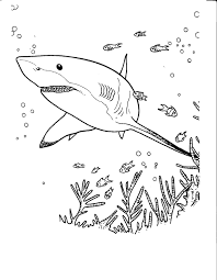 Coloriage Requins Coloriages Pour Enfants Coloriage Requin To Coloriage De Requin Tigre Pour Colorier L