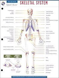Skeletal System Chart Pdf Bedowntowndaytona Com