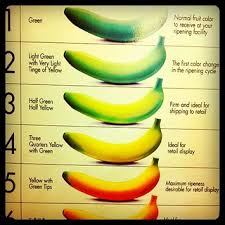 Official Del Monte Banana Color Chart Featuring Futura