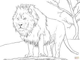 Male African Lion Coloring Page From
