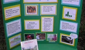 examples of poster board projects science fair projects posters under fontanacountryinn com