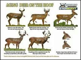 Whitetail Deer Size Chart Allen Carpenter Acc1982 On Pinterest