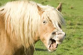 Image result for cranky mare